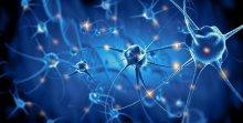 réseau de neurones